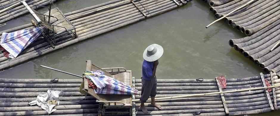 El bambú emerge como herramienta de desarrollo sostenible