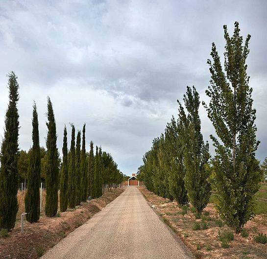 Refugio en la Viña . Valencia . València . España